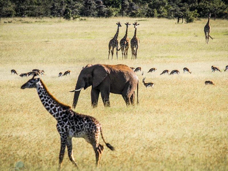 phototrip - Khám phá thiên nhiên hoang dã Kenya