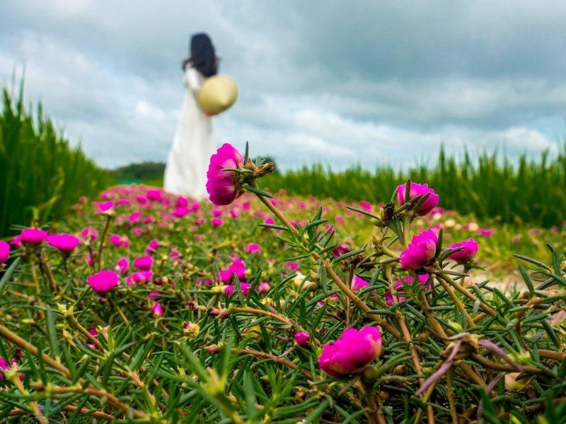 phototrip - Hoa mười giờ