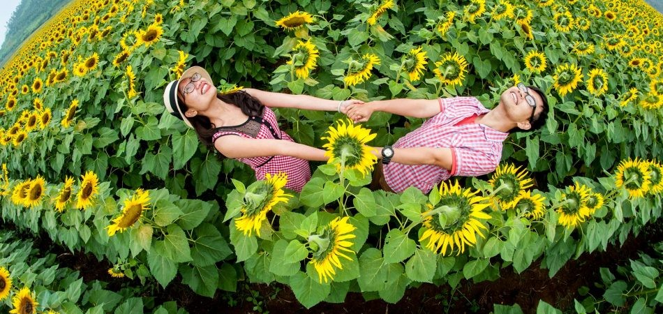 phototrip - Đồng hoa hướng dương