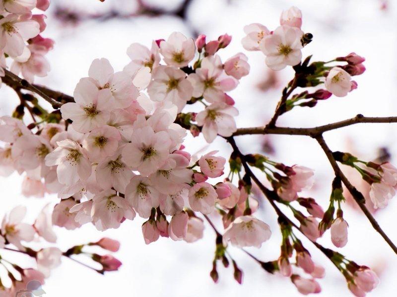 phototrip - Mùa hoa đào