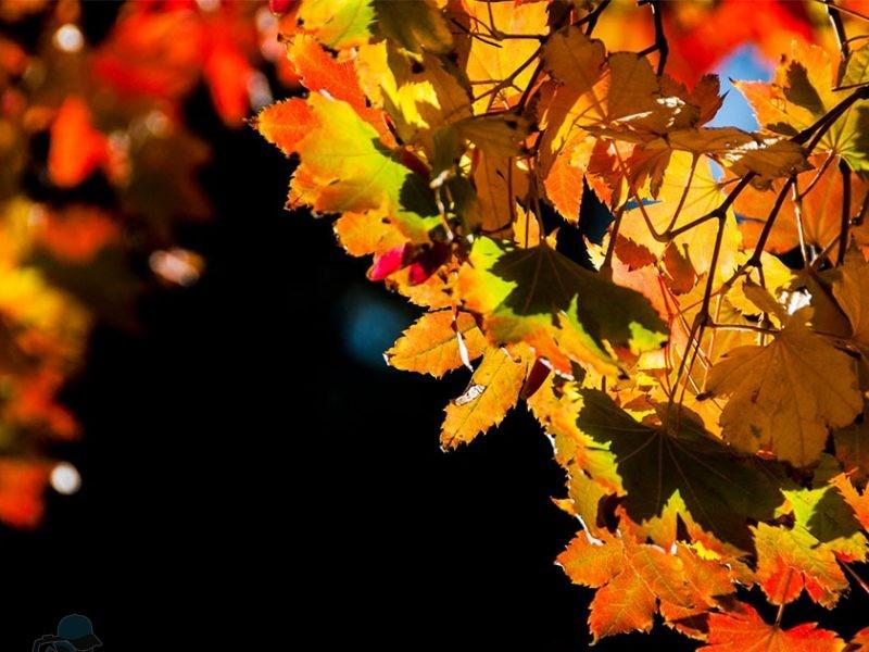Phototrip - Mùa thu Nhật Bản